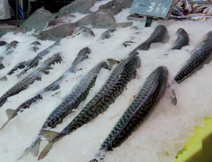 pescadohielo