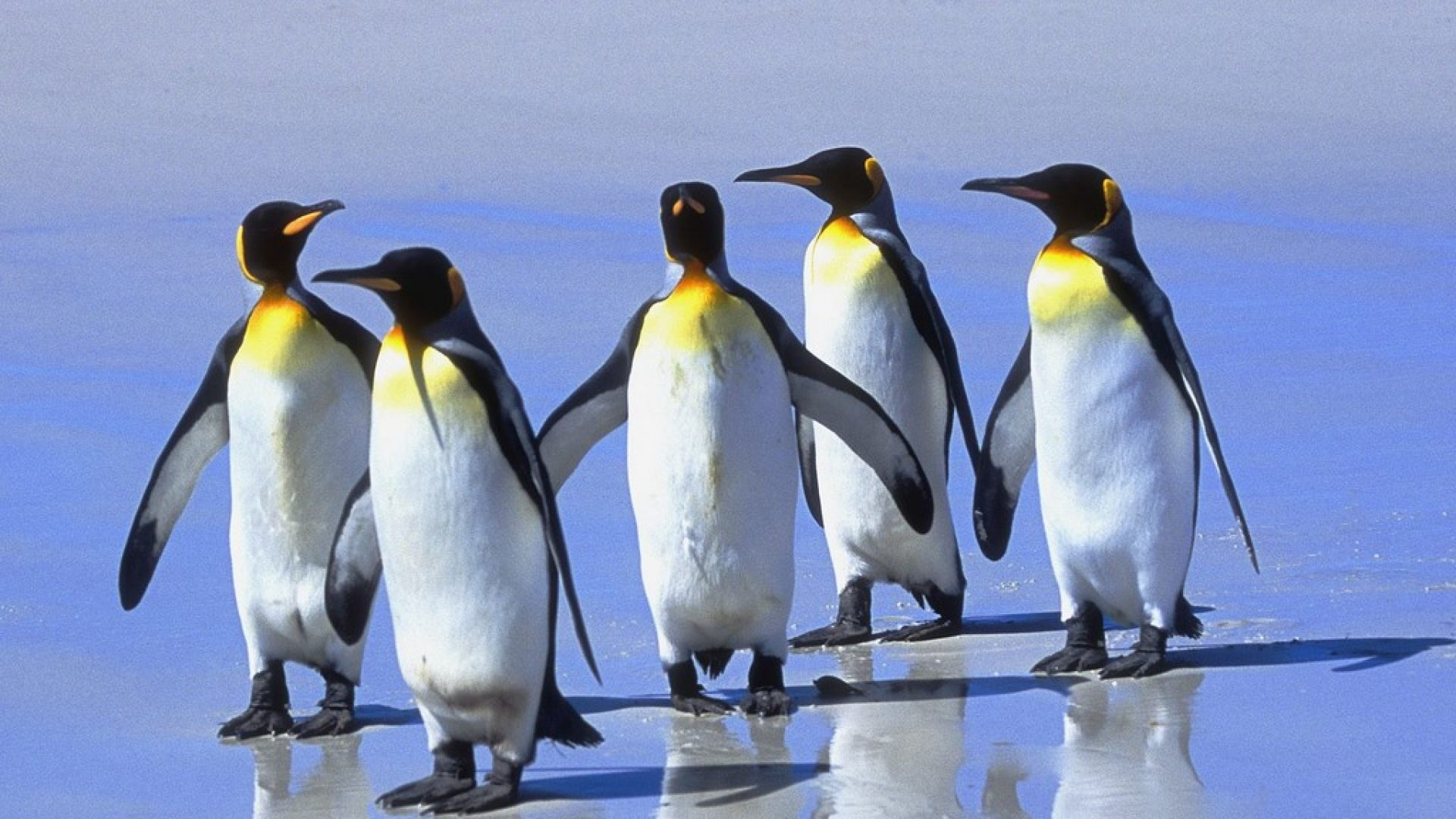 Seis animales que adoran el hielo / Six Animals that Love Ice