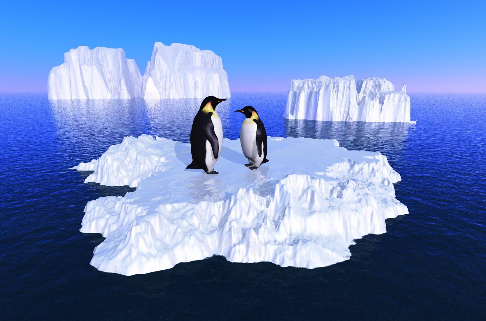 Polo Norte vs. Polo Sur: diferencias y similitudes | ICE FOR LIFE