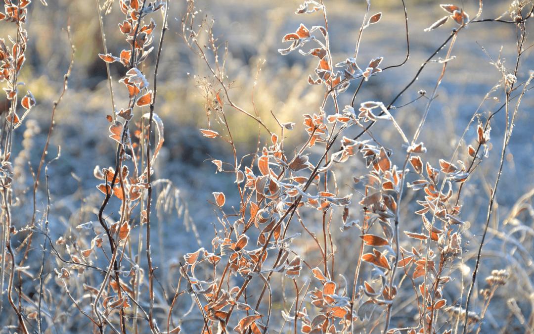 Consejos para soportar un invierno saludable