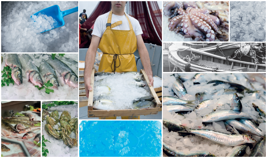 The importance of ice for the fishing industry